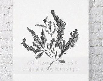 Seaweed in Charcoal Print