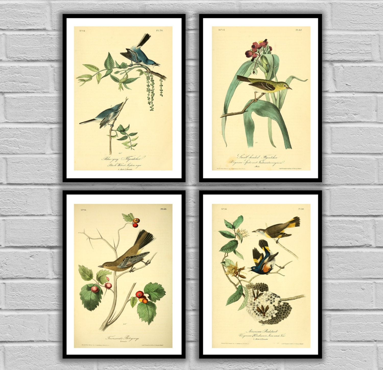 Vintage Bird and Botanical Print Set of 4 - Print or Canvas ...
