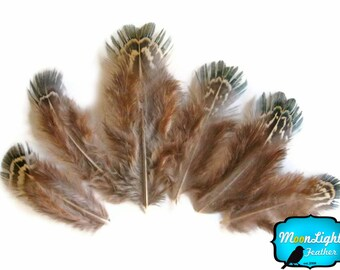 Natural Feathers, 1 Pack - Green Almonds Ringneck Pheasant Feathers 0.10 oz. : 602