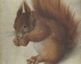 Hans Hofmann: Red Squirrel. Fine Art Print/Poster. (004098)