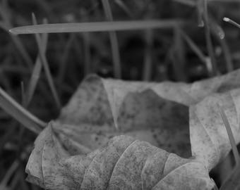 FALLen Leaf in Black and White-Photograph Digital Download