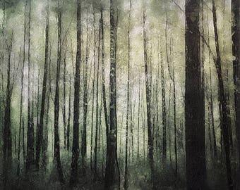 Photography print: textured, forest, trees, light, painterly, wall art, fine art print