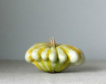 Gourd Still Life Photography, Vegetable Kitchen Art,Blue Kitchen Print,Food Photography,Natural Home Wall Decor,Green Gold Grey Tan Fall Art
