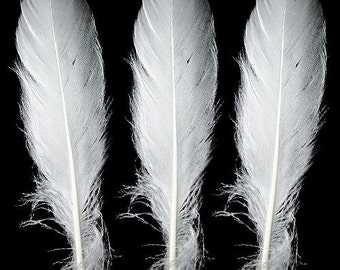 50 White Goose Nagoire Feathers .  UK Supplier