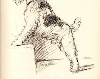 1937 LUCY DAWSON Vintage Dog Print Original Book Plate