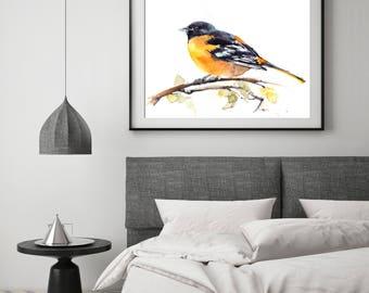 Baltimore Oriole Bird fine art print, bird watercolor painting art, black and yellow bird print, bird art, giclee print of bird