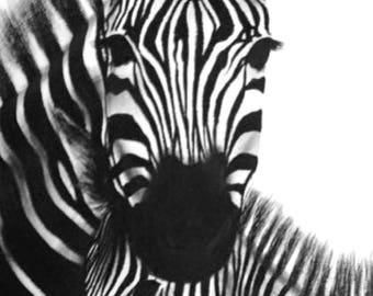 Zebra Charcoal Print