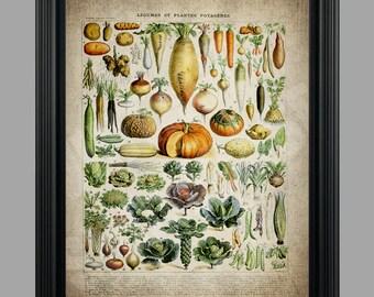 Vintage Vegetable Collage Illustration - Vegetables Legumes Illustration Botanical Instant Digital Download - #050