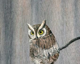 Screech Owl on a Branch