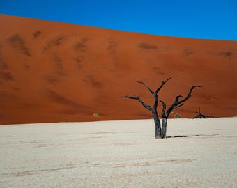 Single Tree on the Dry Lake Bed