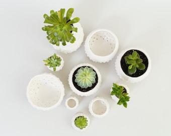 Modern Ceramic Planters Small Mini Plant Pots ~ Handmade White Ceramic Bowls Sculptural Urchin Pots British Studio Pottery Brighton, UK