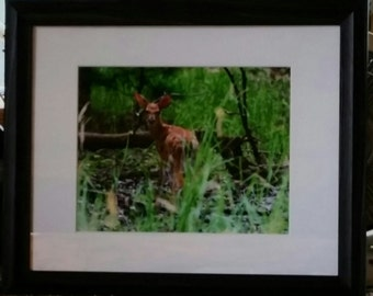 Framed Original Fine Art Photo of Young Whitetail Fawn