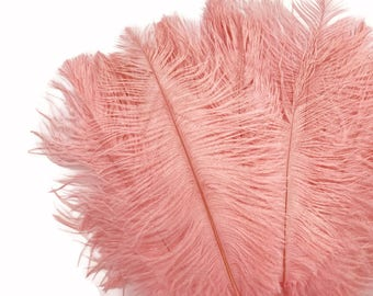 """Ostrich Feathers, 10 Pieces - 6-8"""" Pink Blush Ostrich Body Dyed Drabs Feathers : 1378"""