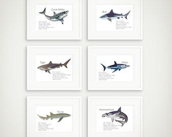 Shark Facts Art Prints - Shark Art Print - Natural History Sharks - Natural History Shark Prints - Shark Poster - Shark Art Print