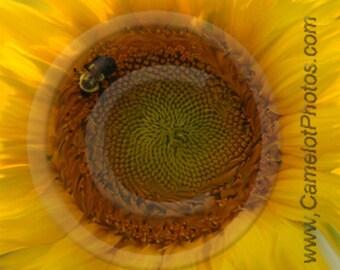 Sun Flower Fine Art Print by DonPuckett
