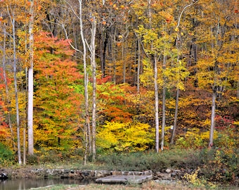 Fall Photography, Fall Colors, Fall Foliage, Landscape Photography, Autumn