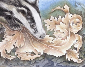 Badger of The Arts & Crafts print - from an original colour pencil drawing by D Y Hide, signed by the artist, available as a greetings card