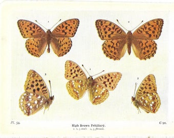 Two Vintage Small 1920s Coloured Butterfly Book Plates -  Fritillary Butterflies -  Ideal For Framing ~ Plates 54/59