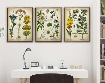 Botanical Print Set of 3, Botanical Set, Flower Print Set of Medicinal Plants, Botanical Poster, Botanical Wall Decor, Passion Flower