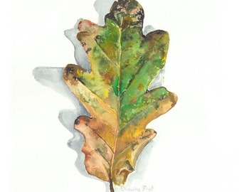 Oak leaf- Autumn single- high quality botanical print on archival paper