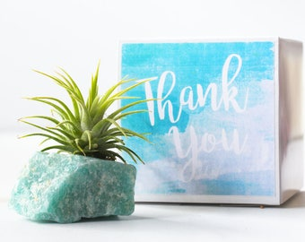 Amazonite Air Plant Thank You Gift, Coworker Gift, Appreciation Gift, Office Gift, Friend Gift, Cute Gift, Boss Gift
