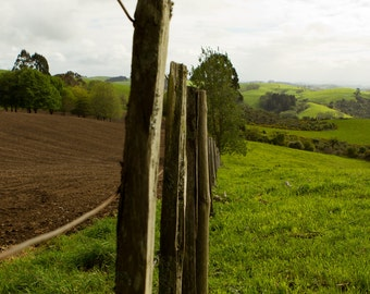 Farm Fence Photography, New Zealand, Spring, Green, Grass, Trees, Hills, Farmland