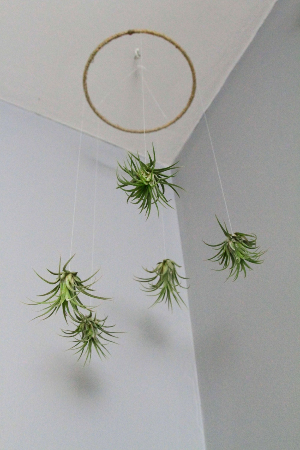 Air plant mobile natural living decor home decor - Plant decorating ideas tasteful nature ...