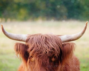 rustic cow farmhouse print, highland cow, cow art, large rustic photography wall art, farm animal art, country decor, rustic home decor