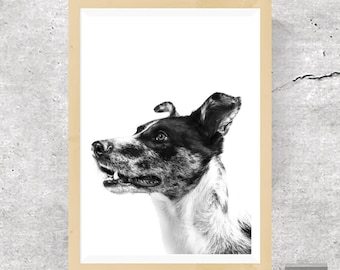 Dog Print, Dog Poster, Animal Print, Nursery Print, Puppy Print, Dog Art, Wall Art, Poster, Prints, Dog Photography, Puppy Art