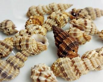 Shell Beads - Chunky Spirals - GM409