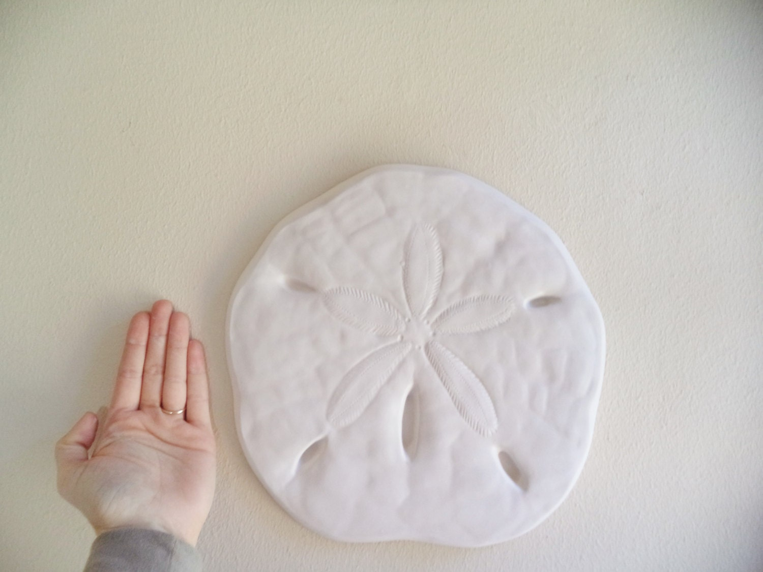 Sand Dollar Wall Hanging Sculpture Sea Shell Beach Decor