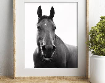 Horse Photograph with White Background, Black and White Horse Photography, Physical Print