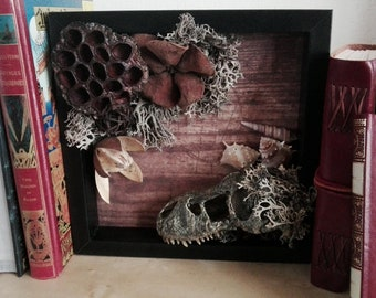 Skull and floral frame (shadowbox, curio cabinet, vanity)