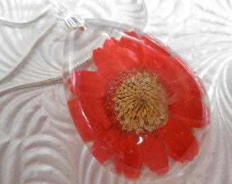 Passion Red Daisy Glass Teardrop Pressed Flower Pendant-Symbolizes Loyal Love, Passion-Gifts Under 35-Nature's Art-April's Birth Flower