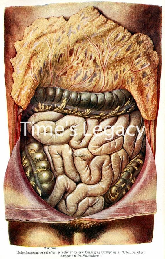 Anatomía del Abdomen humano Digital descargar alta resolución