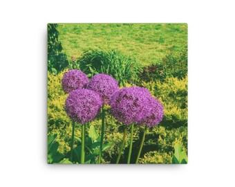 Pop of Allium