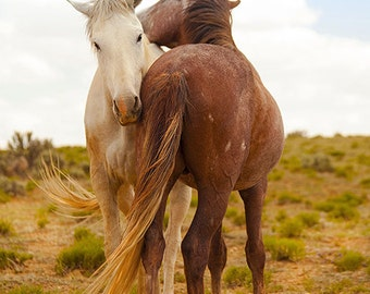 Stallion Mare Two Wild Mustang Horses In Love In New Mexico Animal Fine Art Photography Print
