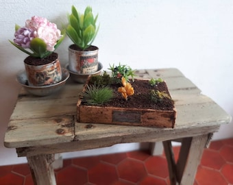 reserved for Linda. Miniature plants Box