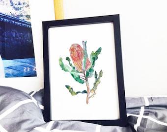 Banksia Flower Poster Art Print