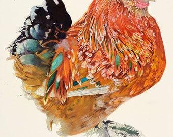 Orange Brahma Rooster