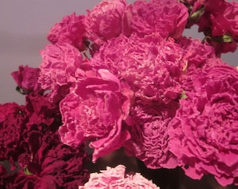 Dry Whole Rose Pink Peony Flowers with Long Stems, Organically Grown, Naturally Dried