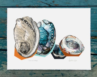 Haliotidae - Archival art print of original painting of Abalone cluster
