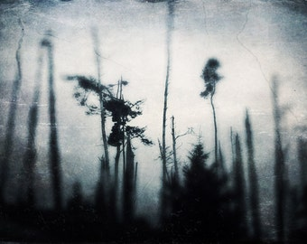 Ominous Forest