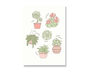SALE Succulents A4 Illustration Print - 80% off