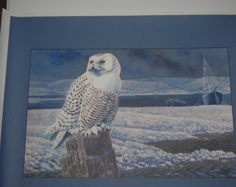 """Canvas PRINT - SNOWY OWL by Anglesey Tunnicliffe 11""""x14""""  - T241"""