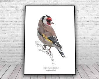 Goldfinch - Low Poly geometric art