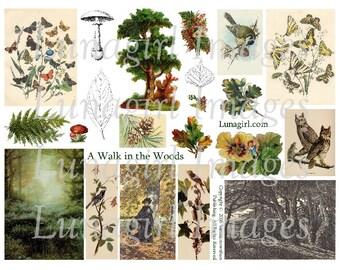 WOODLAND WALK digital collage sheet, nature trees forest birds butterflies mushrooms leaves, vintage images Victorian art, ephemera DOWNLOAD