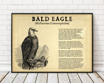 Bald Eagle Poster, Bald Eagle print animal print animal lover gift animal poster birthday gift Bald Eagle Large Poster American Bald Eagle