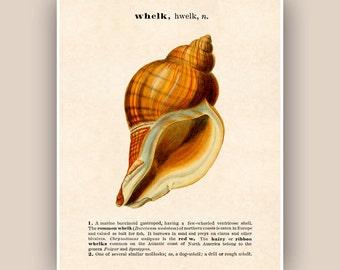 Seashell Print, Vintage whelk image print, Dictionary definition text, Sea shell art, Nautical art,  Coastal Living, beach cottage decor