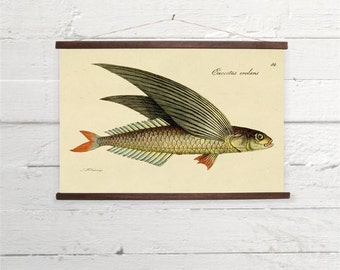 Vintage Flying Fish Natural History Canvas Poster Print Wooden Wall Chart